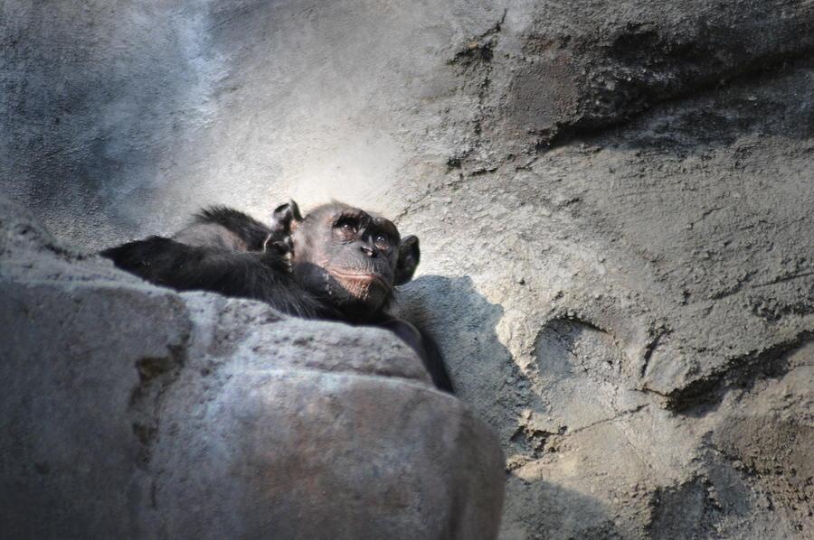 Animal Photograph - Between by Dan Holm