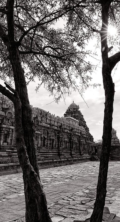 Krishnan Photograph - Between by Krishnan Srinivasan