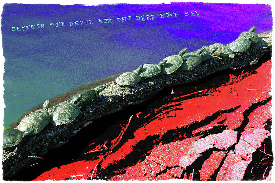 Turtles Digital Art - Between the Devil and the Deep Blue Sea by D Patrick Miller