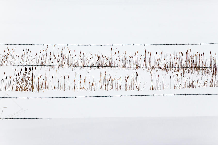 Between the Lines - by Julie Weber