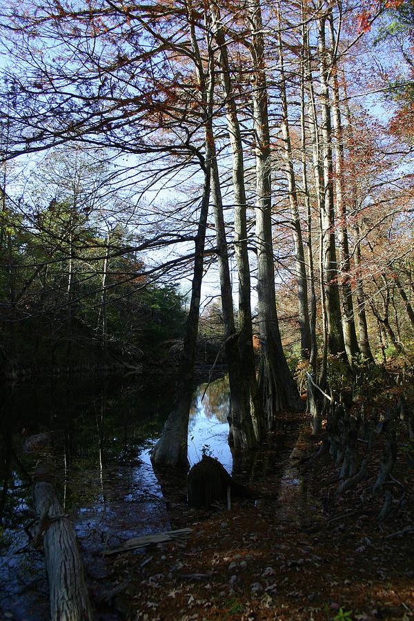 River Photograph - Between Trees by Nina Fosdick