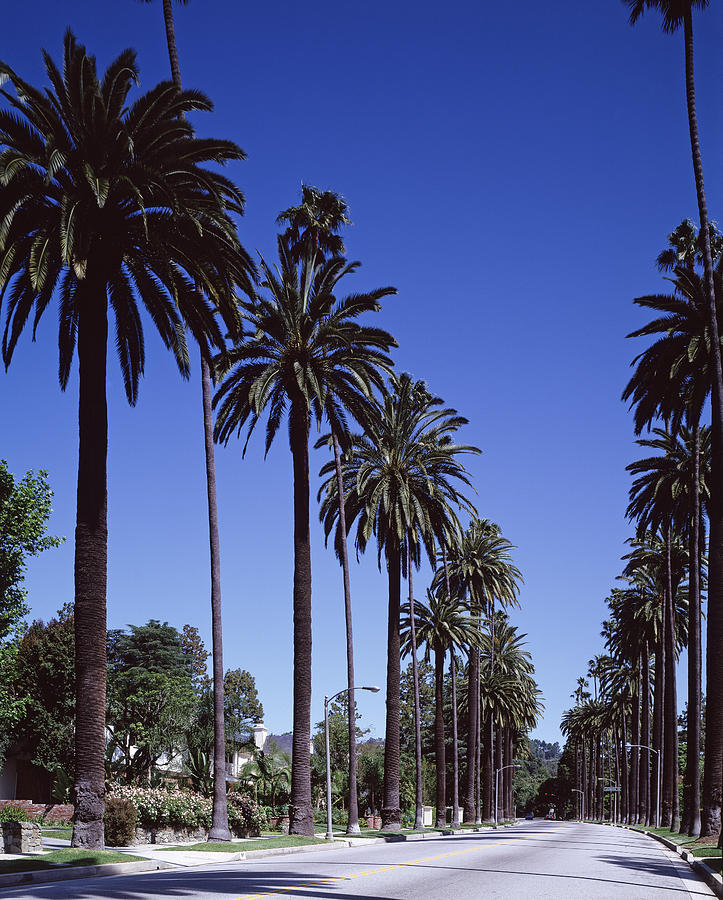 2000s Photograph - Beverly Hills And The Bel-air Section by Everett