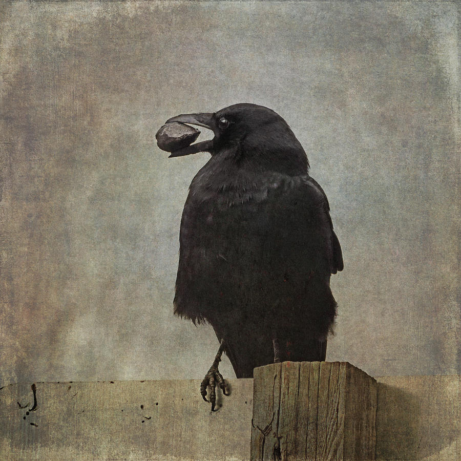 Beware of Crows by Sally Banfill