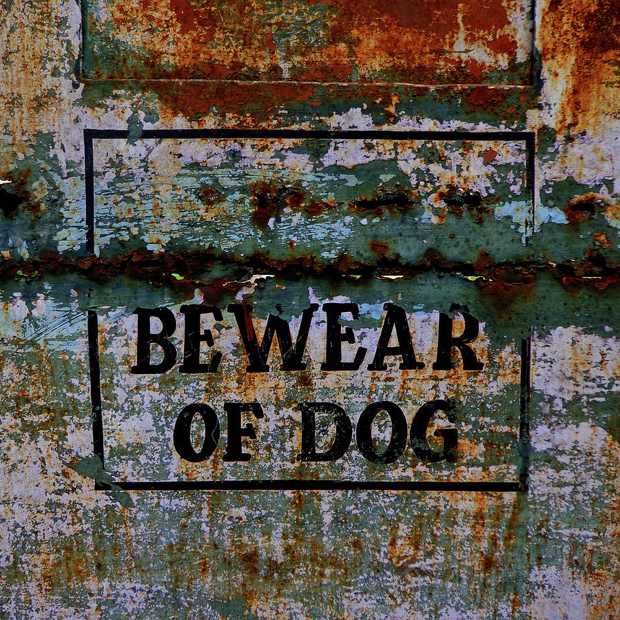 India Photograph - Bewear Of Dog by Misentropy