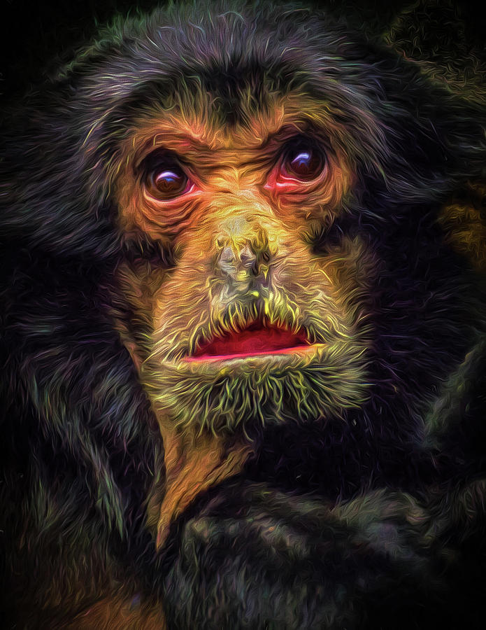 Monkey Photograph - Bewildered by Paul Malen