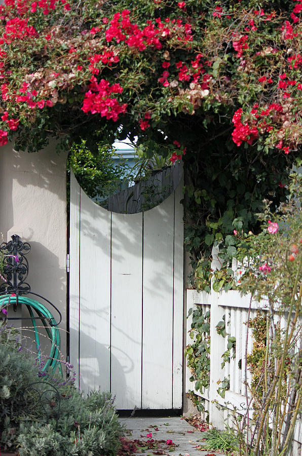 Garden Photograph - Beyond The Garden Gate by Suzanne Gaff