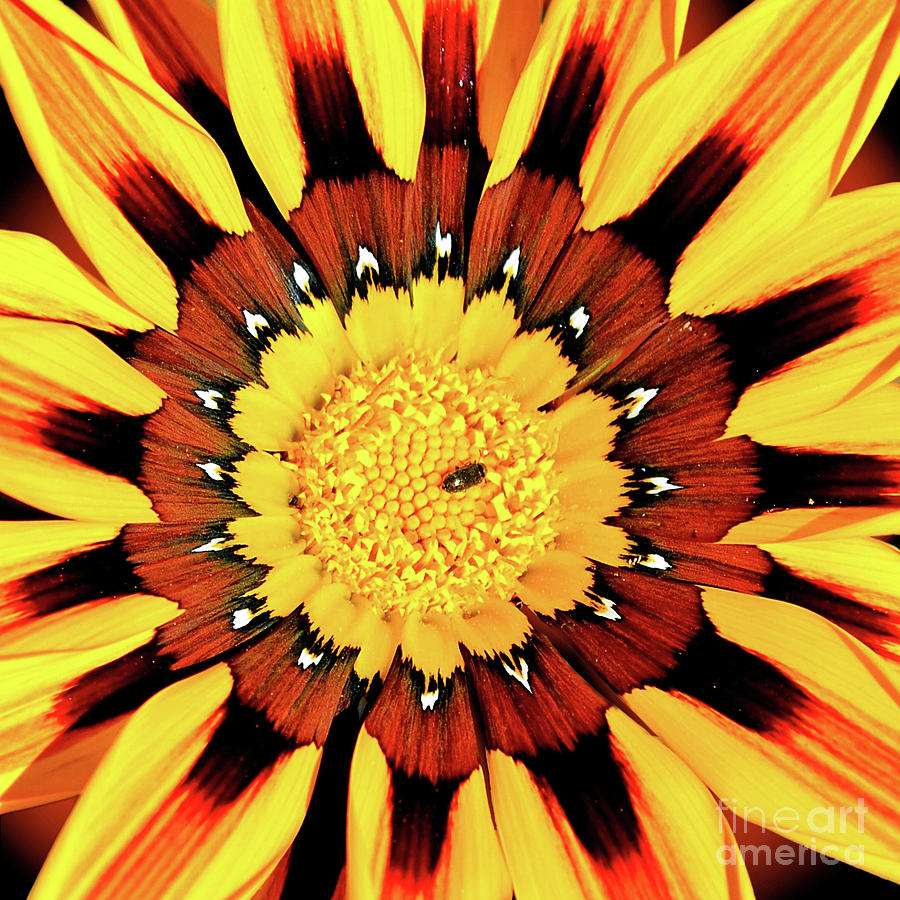 Flower Photograph - Beyond The Surface by Third Eye Perspectives Photographic Fine Art