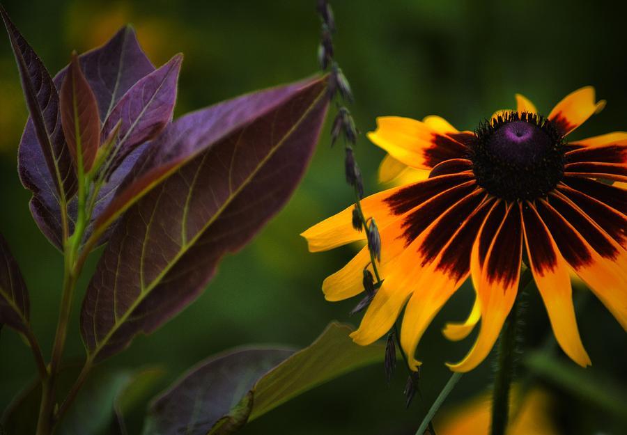 Flowers Photograph - Bffs 2 by Robert McCubbin