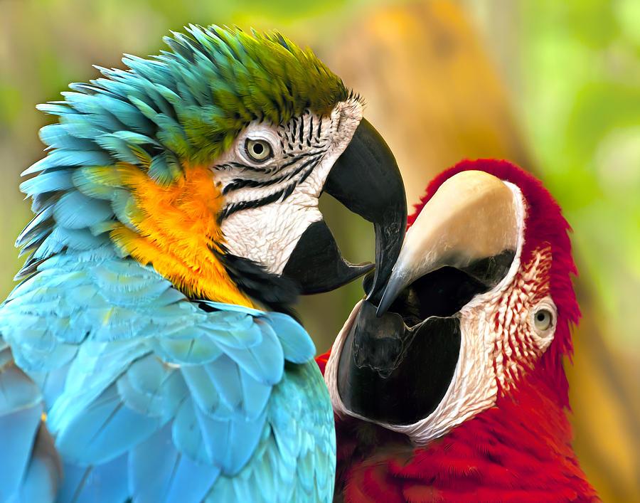 Macaws Photograph - Bffs by Jennifer Harrington Relyea