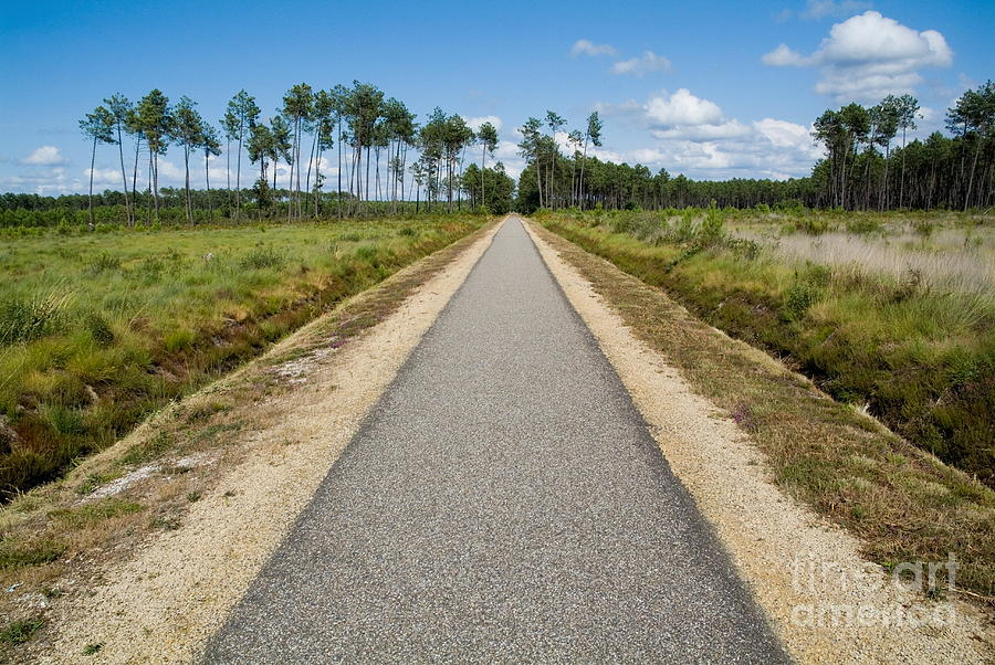 Absence Photograph - Bicycle Track Passing Through The Landes Forest by Sami Sarkis