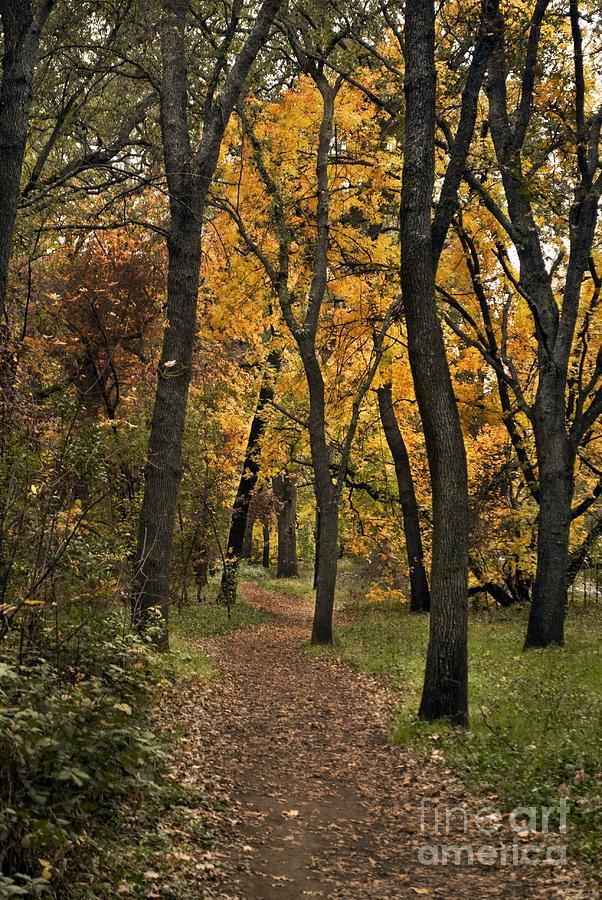 Landscape Photograph - Bidwell Park Fall by Richard Verkuyl