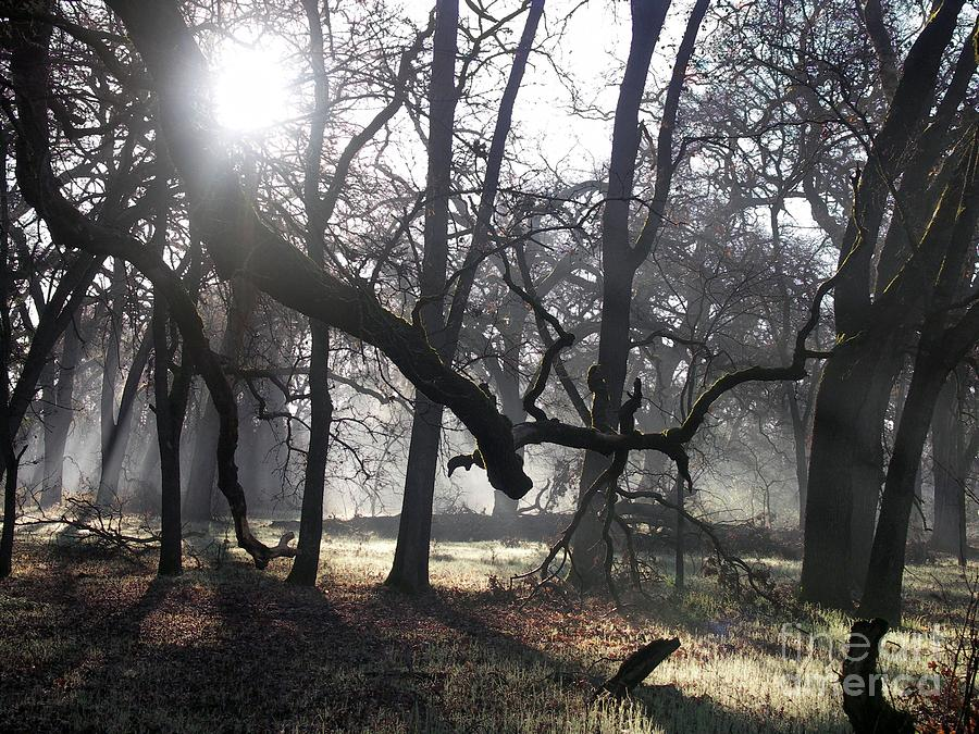 Landscape Photograph - Bidwell Park Sunrise by Richard Verkuyl
