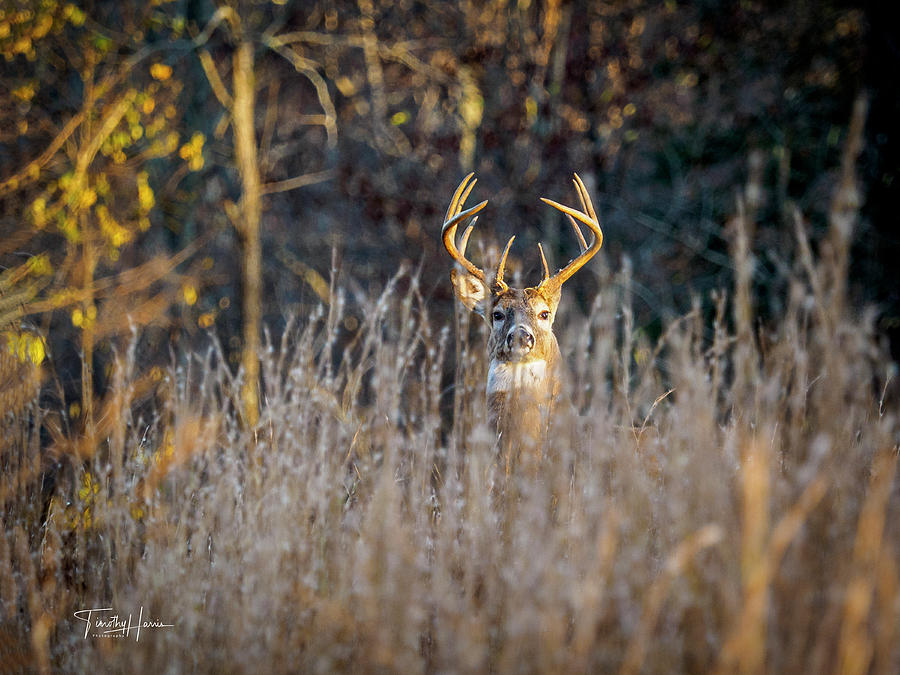 Big 10 by Timothy Harris