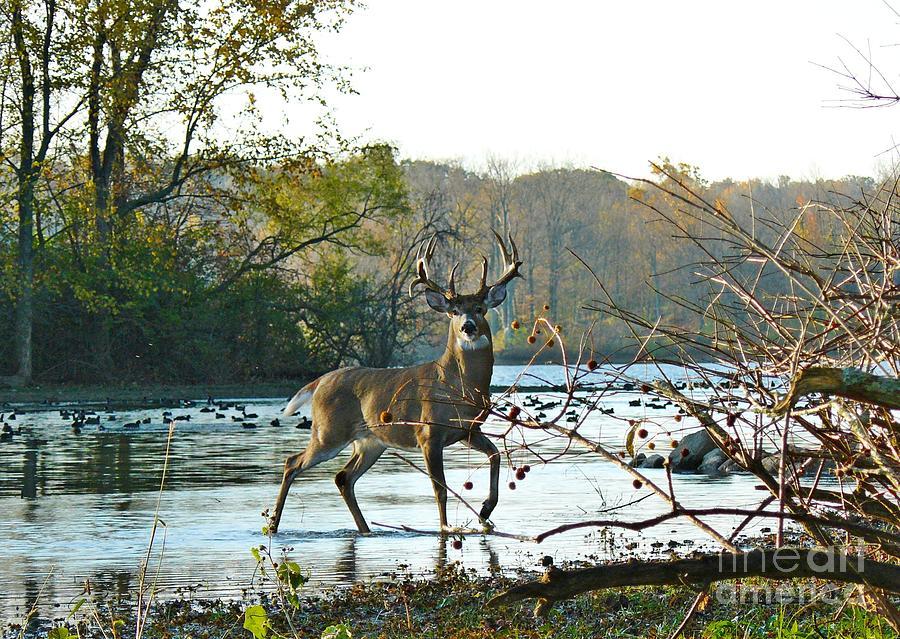 Deer Photograph - Big Beautiful Buck by Susan Olga Linville