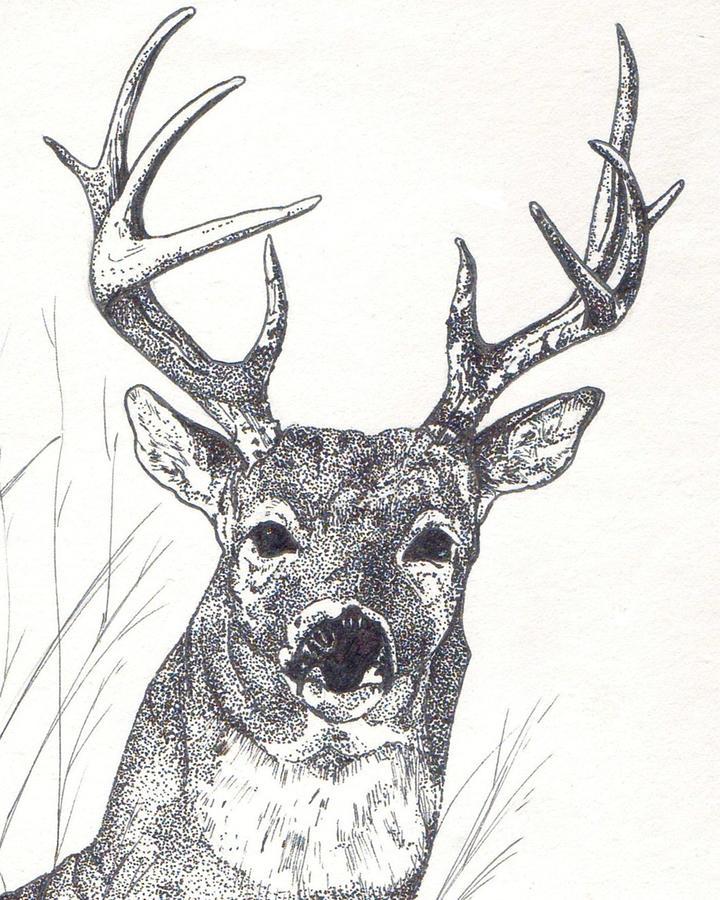 Whitetail Deer Painting - Big Buck by Debra Sandstrom