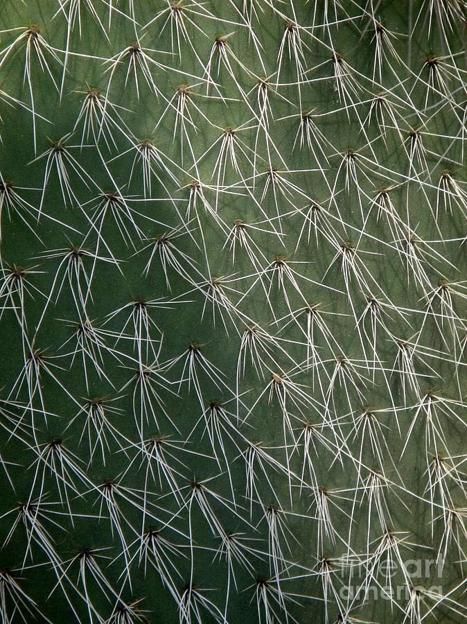 Big Cactus Photograph - Big Cactus Pins. Close-up by Sofia Metal Queen