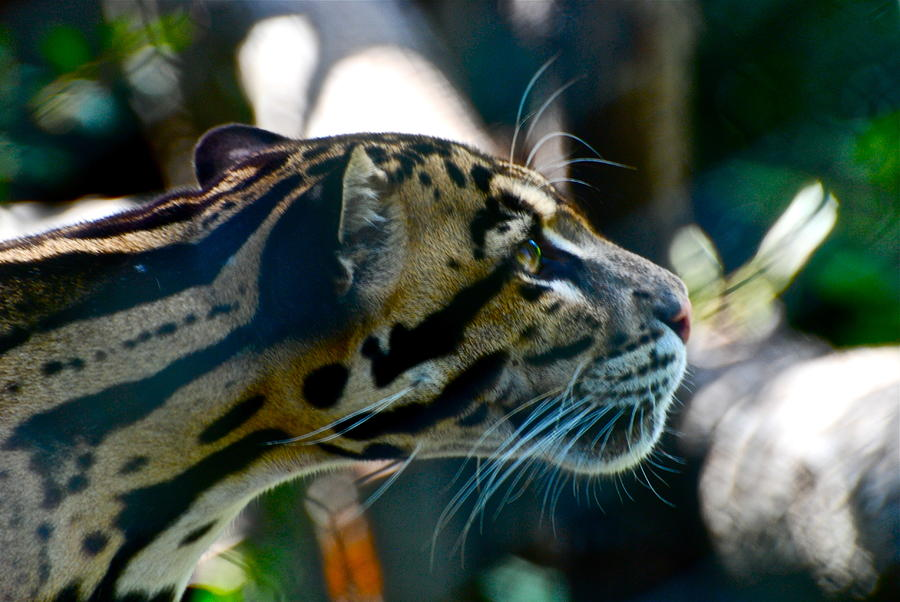 Big Cat Photograph - Big Cat by Gene Sizemore