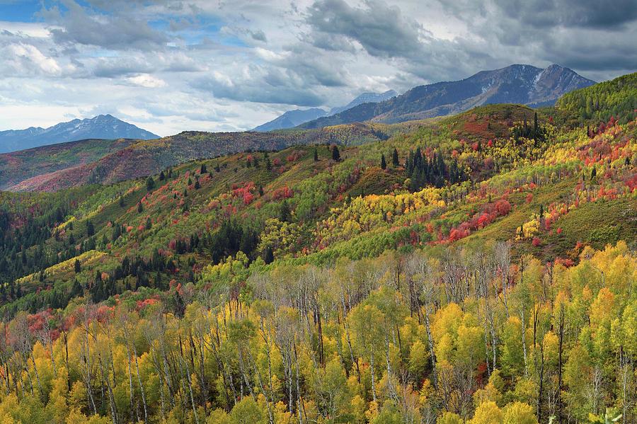 Guardsman Pass Photograph - Big Cottonwood Canyon Fall Colors by Dean Hueber