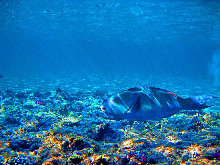 Underwater World Photograph - Big Fish. Underwater World. by Andy Za