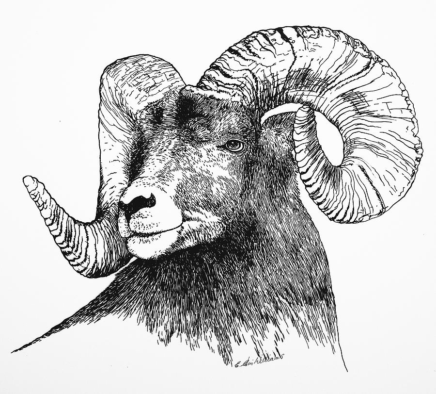 Big Horned Sheep by E Colin Williams ARCA