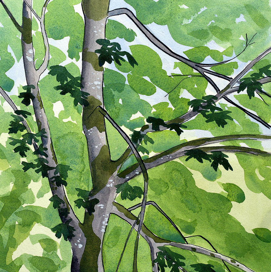 Tree Painting - Big Leaf Maple by Alexandra Schaefers