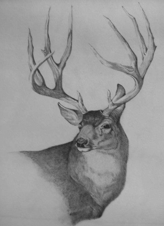 how to draw a mule deer