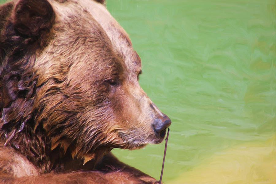 Bear Photograph - Big Old Bear With A Tiny Stick by Karol Livote