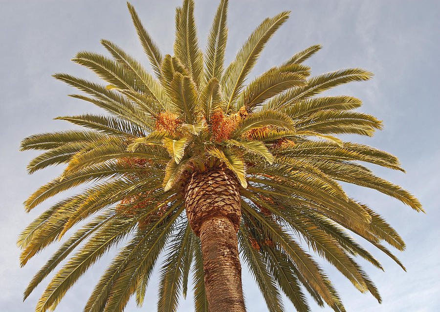 Palm Photograph - Big Palm by Jean Booth