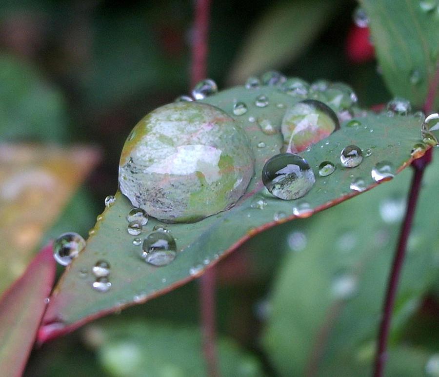 Leaf Photograph - Big Raindrop by Ariel Horn