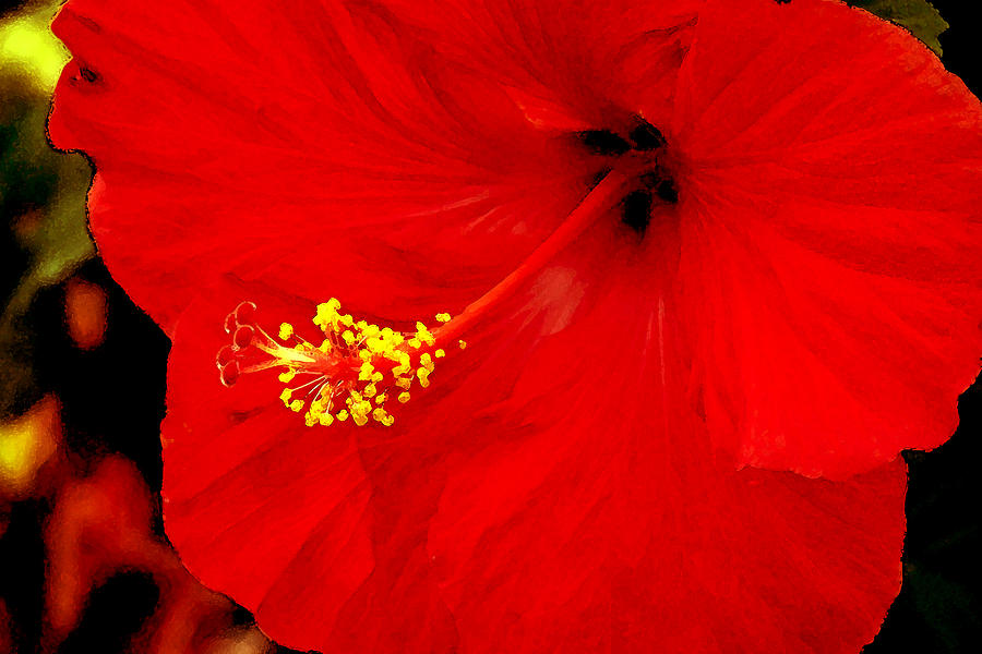 Caribbean Photograph - Big Red Caribbean Hibiscus by Leonard Rosenfield