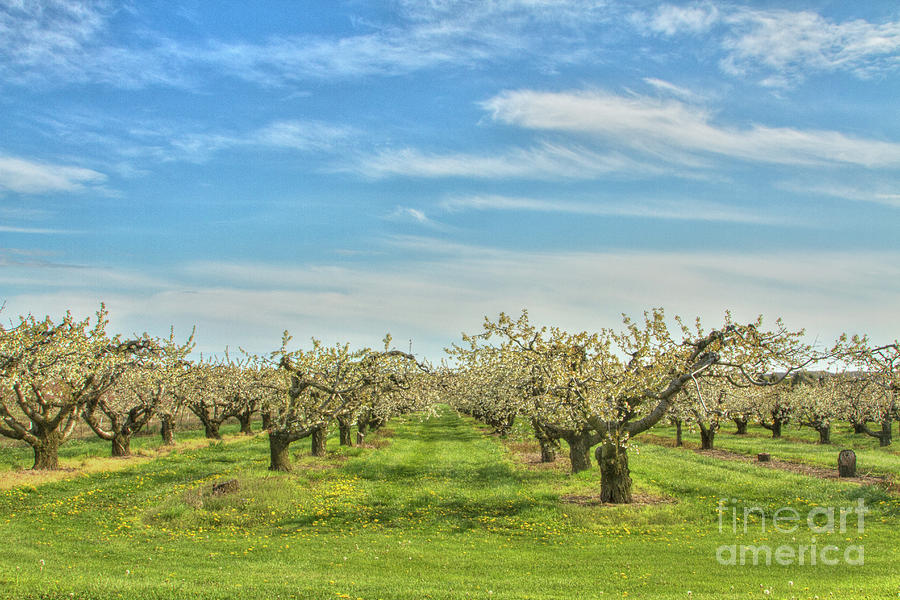 Big Sky Orchard Photograph by Marilyn Cornwell