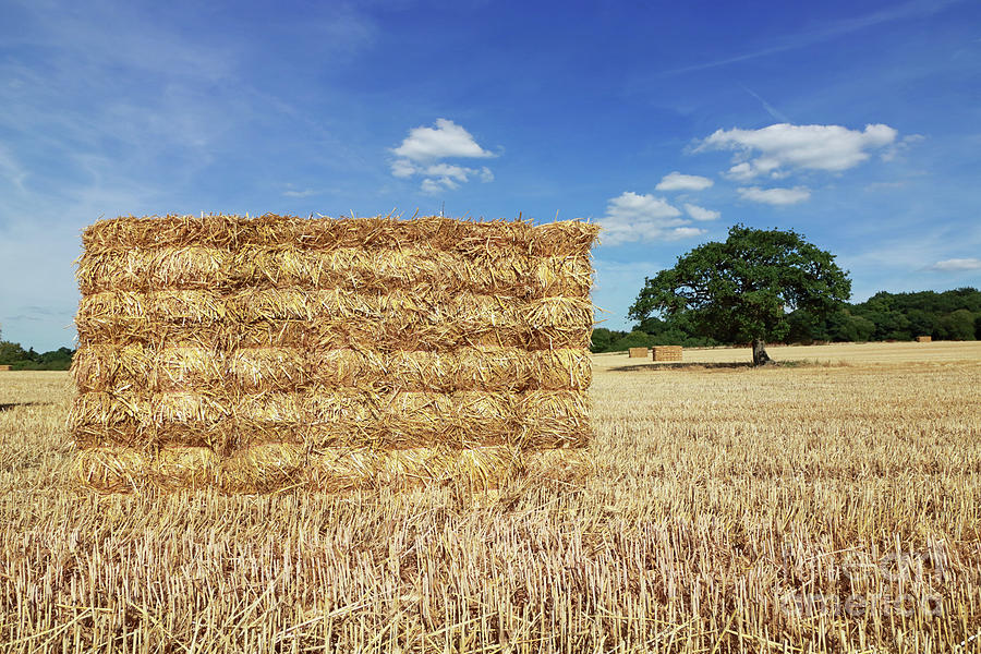 Big straw bales  by Julia Gavin