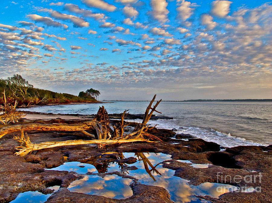Big Talbot Island Photograph By Scott Moore