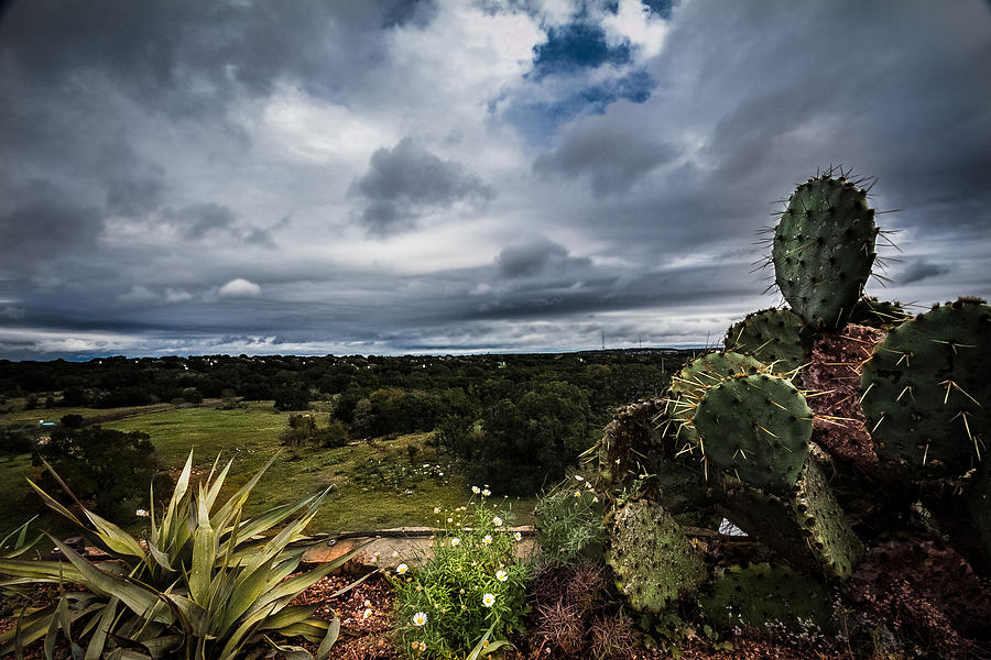 Cactus Photograph - Big Texas Sky by Amber Dopita