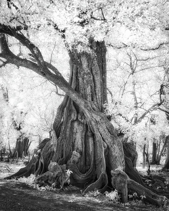 Big Tree by Dianna Lynn Walker