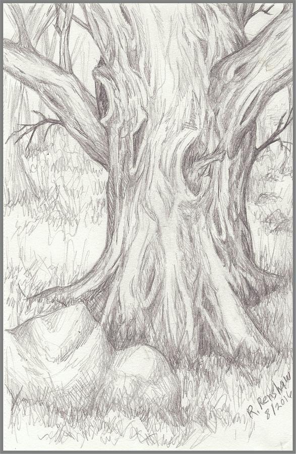 Drawings Drawing - Big Tree by Ruth Renshaw