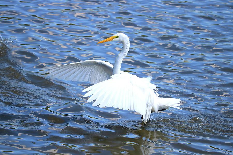 Big Wings Walk Photograph by Tony Umana