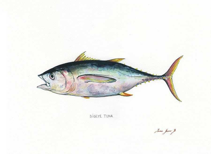 Tuna Fish Painting - Bigeye Tuna by Juan Bosco