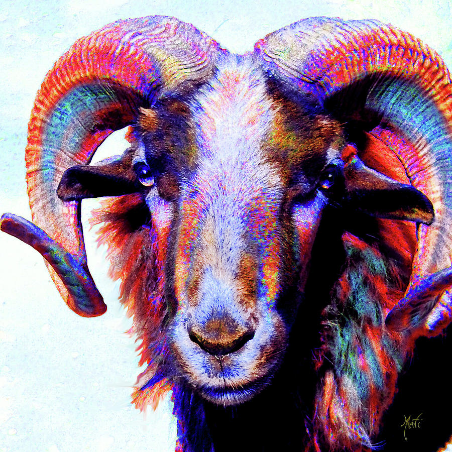 Bighorn Ram Sheep Mixed Media