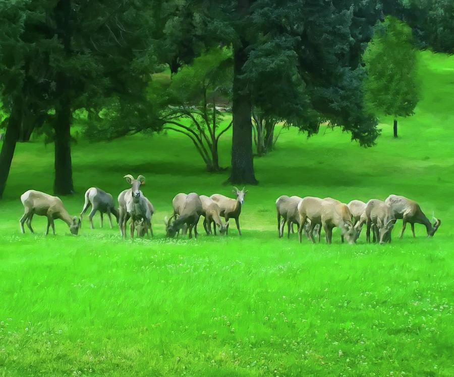 Bighorn Sheep Ewes Painting