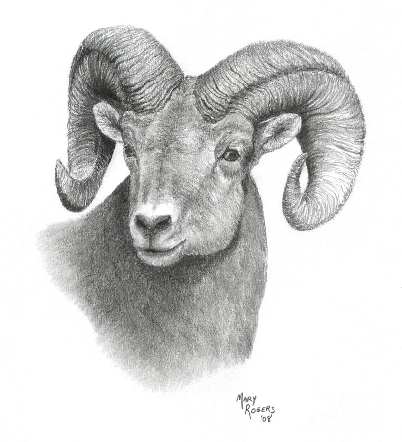 Ram Drawing - Bighorn Sheep by Mary Rogers