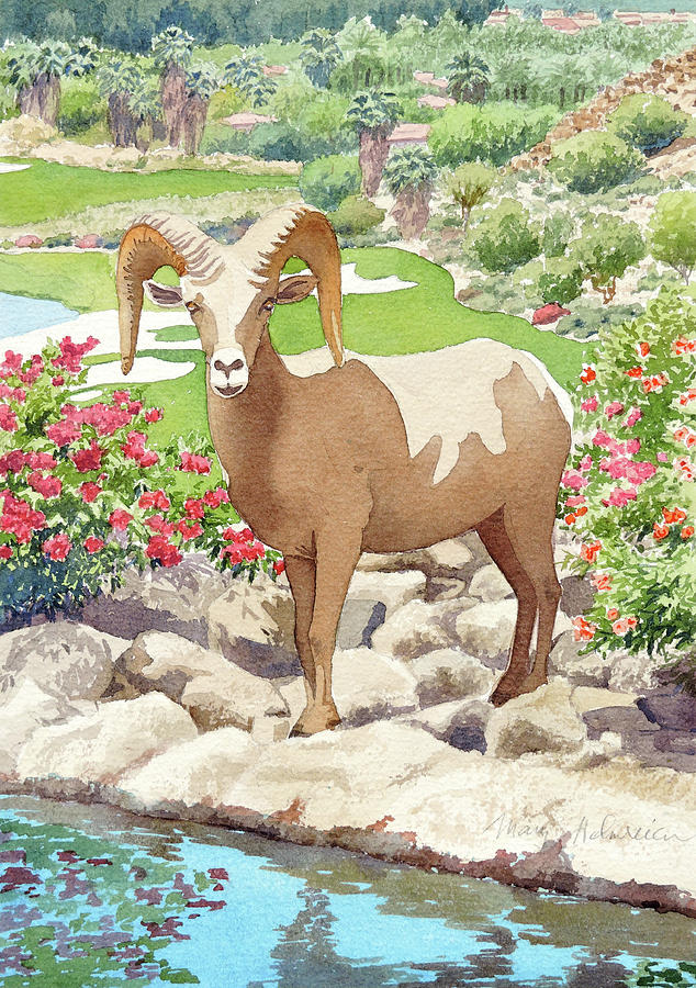 Bighorn Sheep on Golf Course by Mary Helmreich