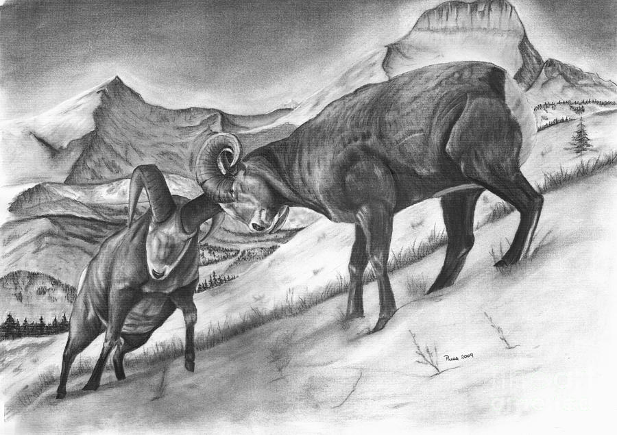Bighorn Sheep Drawing - Bighorn Sheep The Battle For Supremacy by Russ  Smith