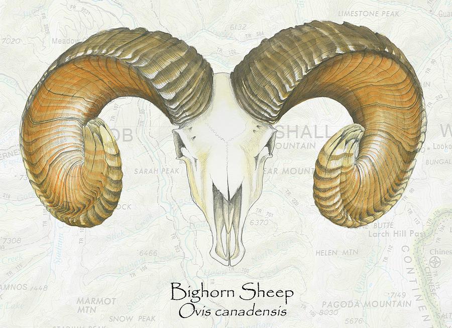 Bighorn Skull Painting by Kerry Pride