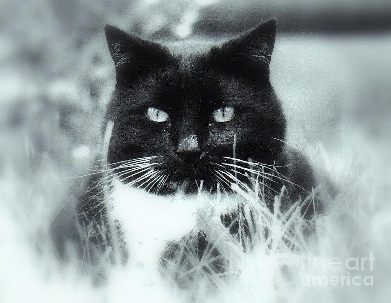 Cat Photograph - Biko In The Grass by Maria Scarfone