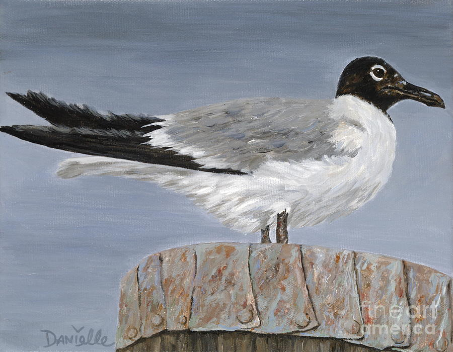 Seagull Painting - Bimini Gull by Danielle  Perry