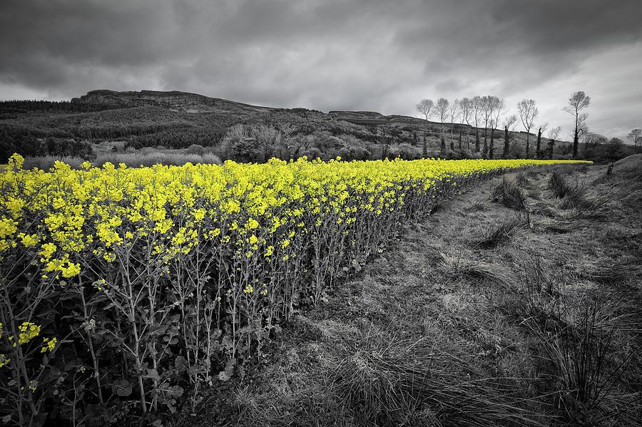 Binevenagh On Yellow 2 Photograph