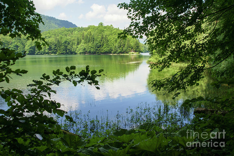 Montenegro Photograph - Biogradska Gora Forest  by Ruth Hofshi