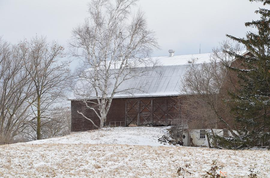 Birch Photograph - Birch Barn by Greg Hayhoe