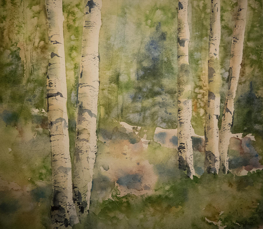 Birch Forest by Terry Ann Morris